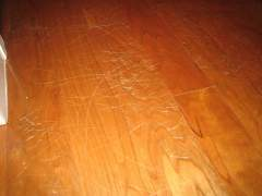 Scratches from animal claws on the wooden floor