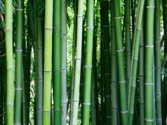 Bamboo is suitable for the production of floor coverings