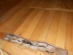 Hardwood floors swollen from water